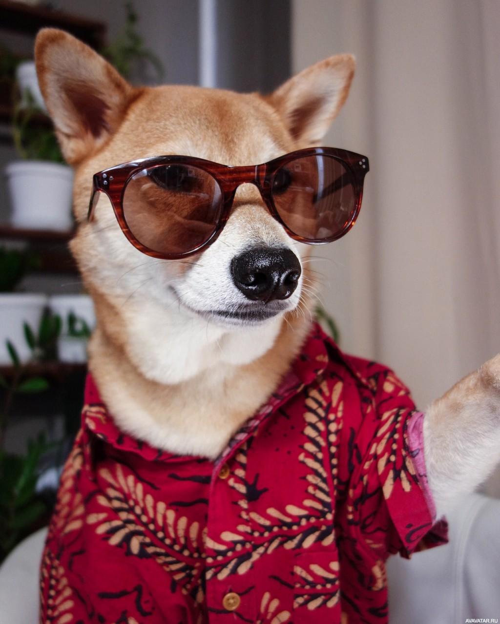 Фото собаки в очках