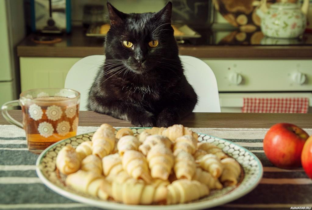 Коты с едой фото