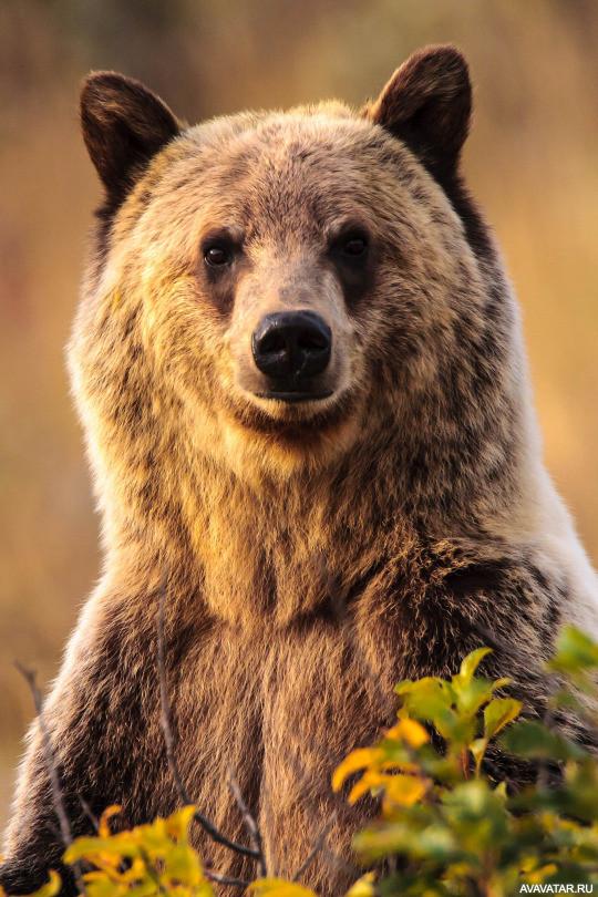 расскажу медвежонок картинки аватарки для объявлений свежие объявления