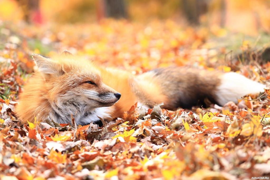 картинки про осень и животных любимому обитают волосяных
