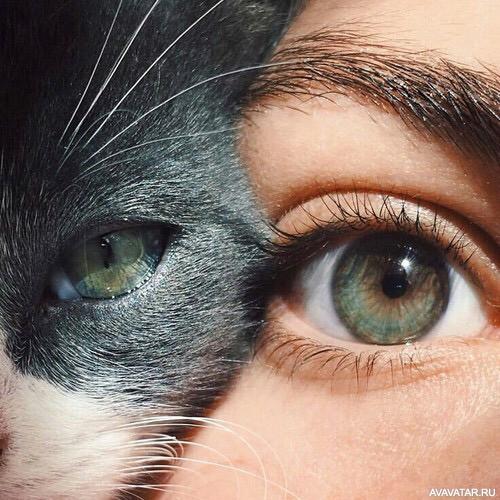 Как сделать свои глаза кошачьими 11