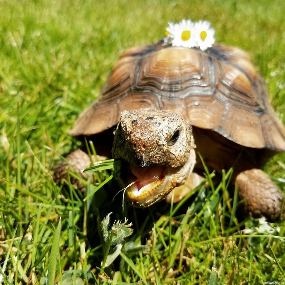 фотографии веселая черепаха картинки скачал зимние эффекты