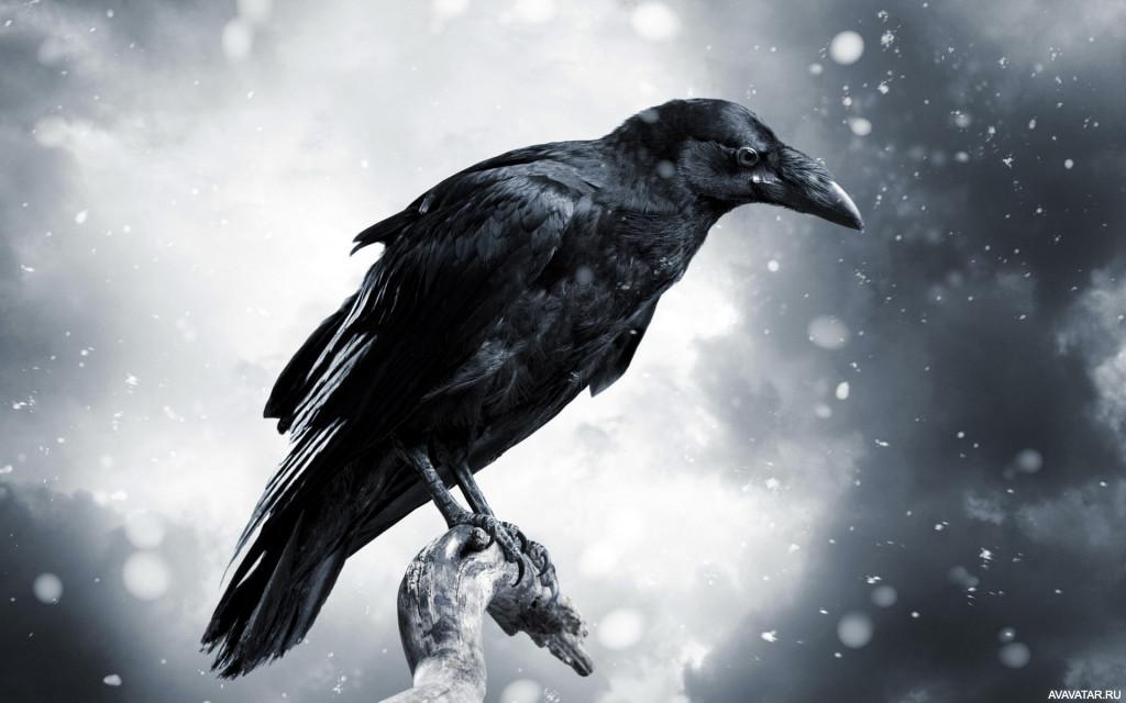 лучшие сонник ч мему снится одна ворона кажется