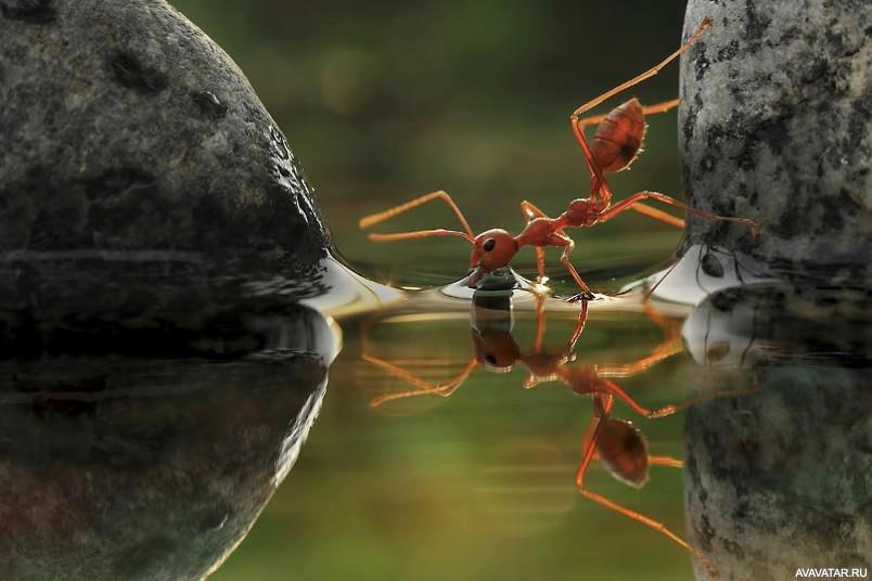 Птицы в картинках муравей