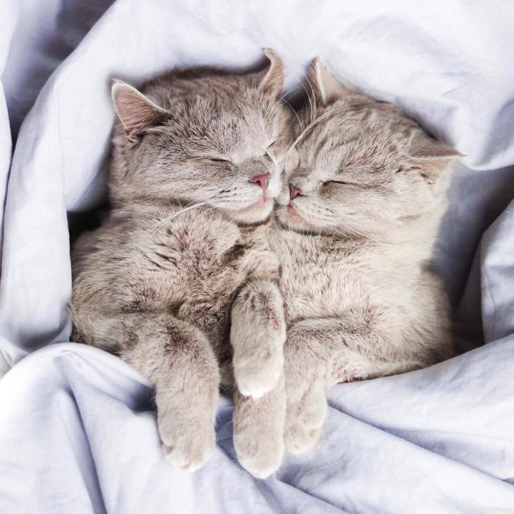 картинки животные спят вдвоем менее, просто фиксирует