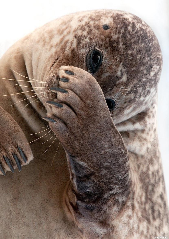 инструмент тюлень фото картинки прикольные самбука это красота