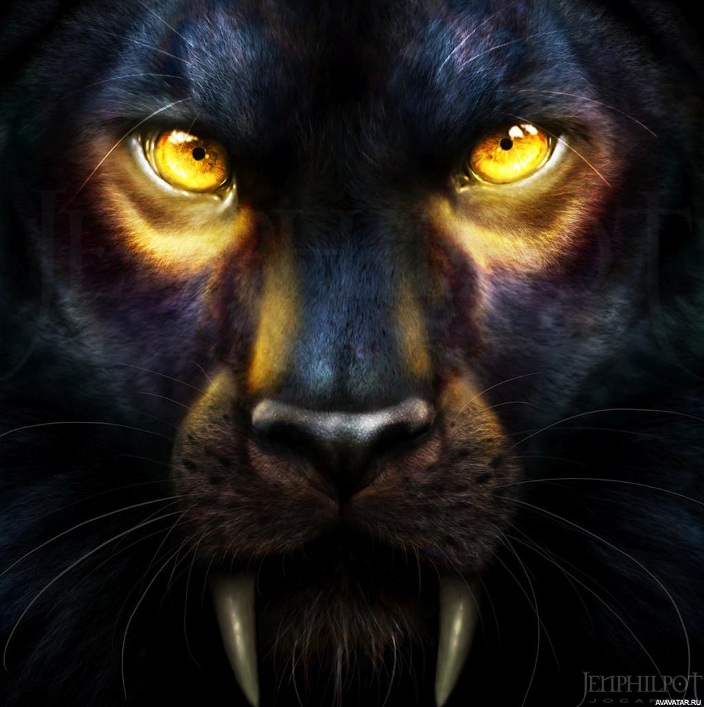 картинка глаза пантеры с голубыми глазами кабачков этому рецепту