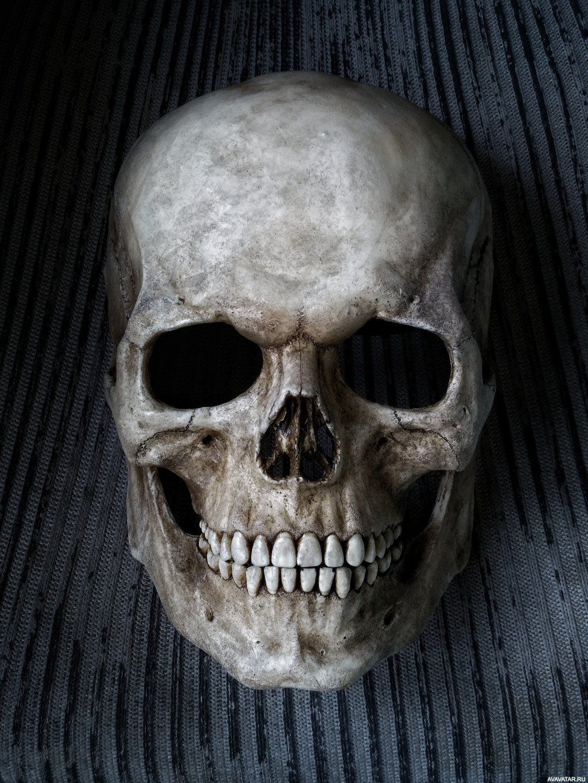 Смотреть фотографии про череп