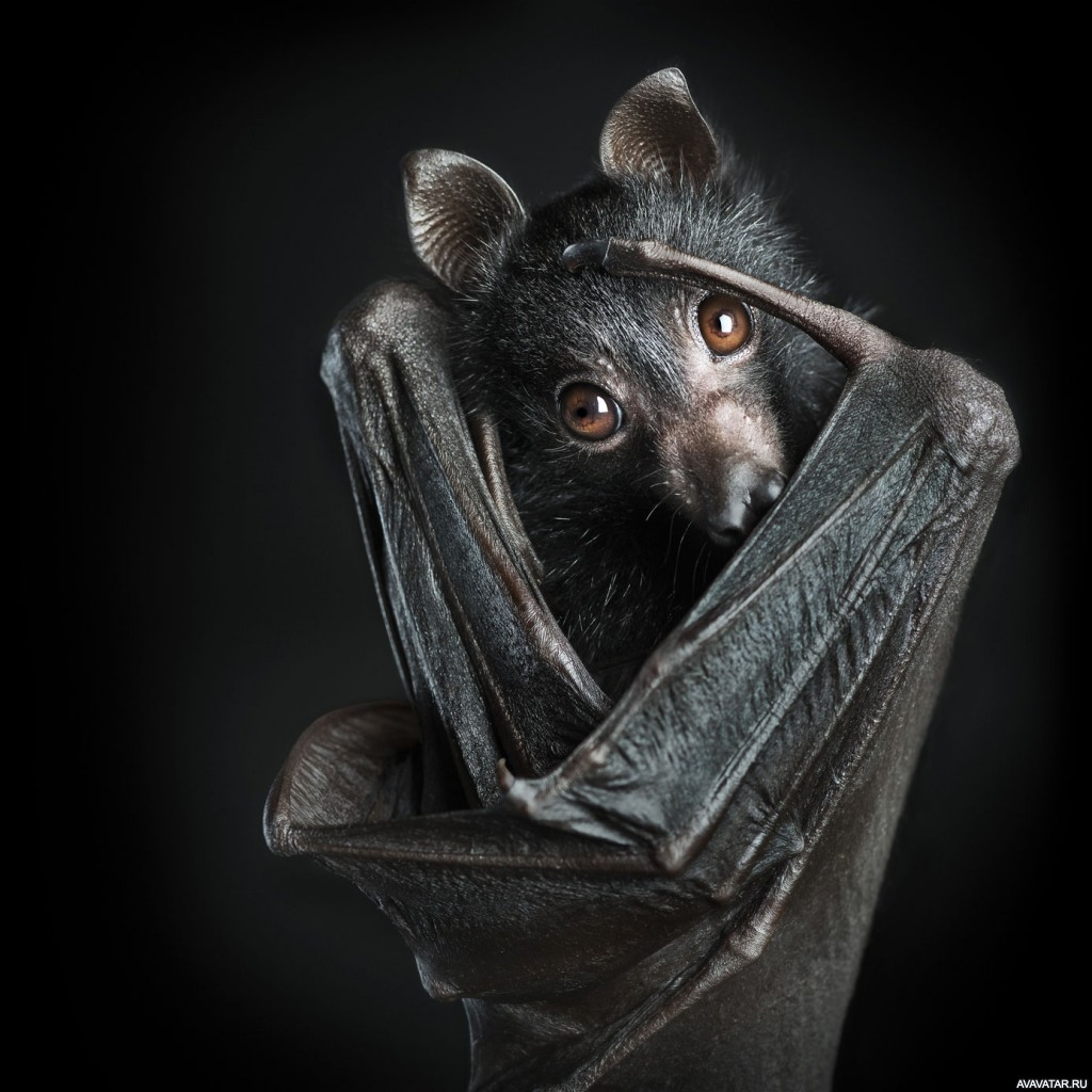 Прикольная картинка летучая мышь, открытки