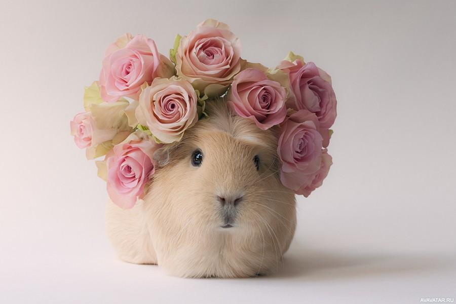 Поздравления цветами, милые картинки с букетом