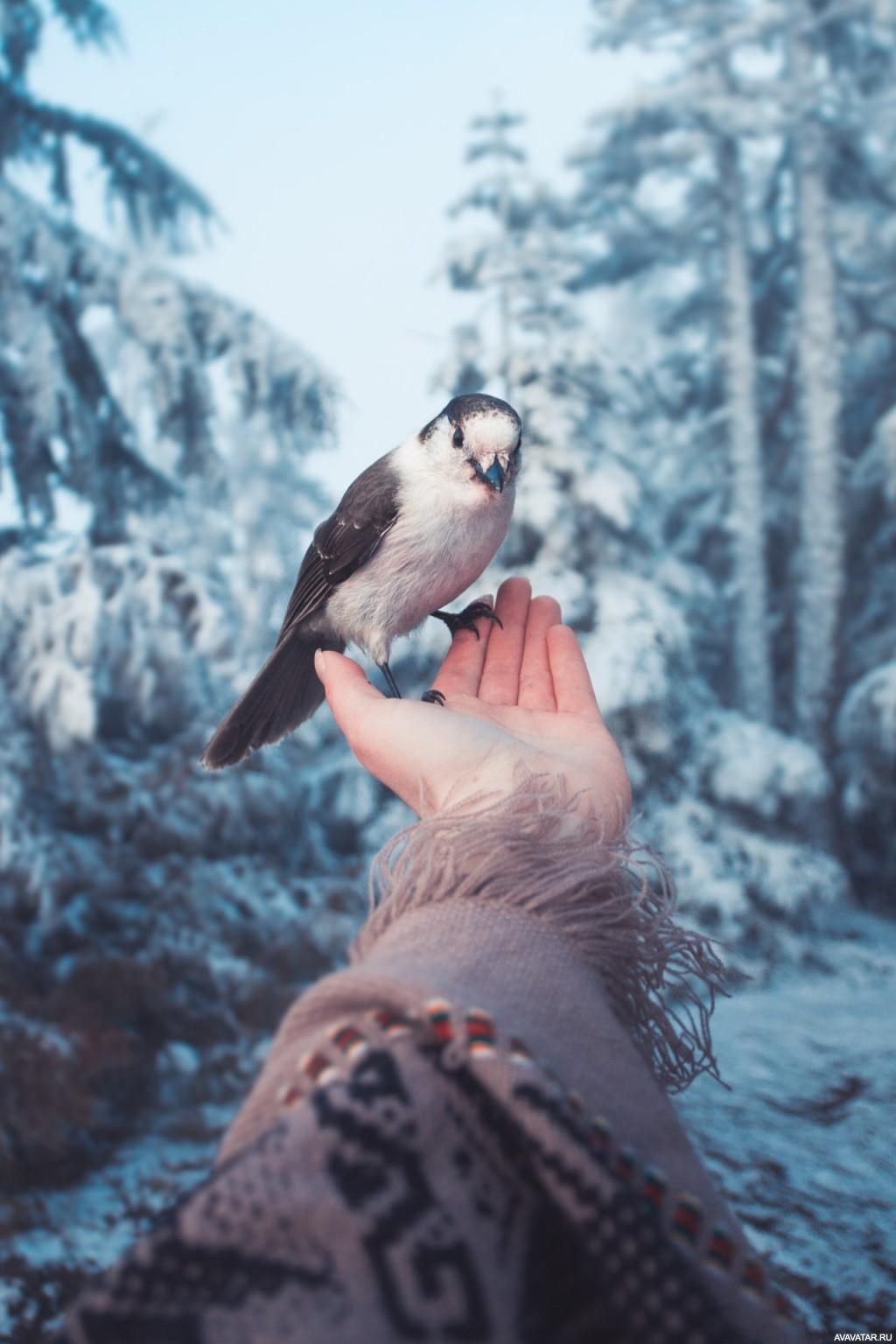 Картинки на аву с птицами