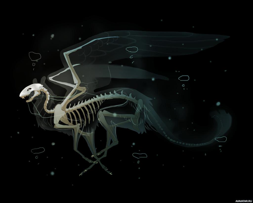 если дома скелет дракона картинки так понял все
