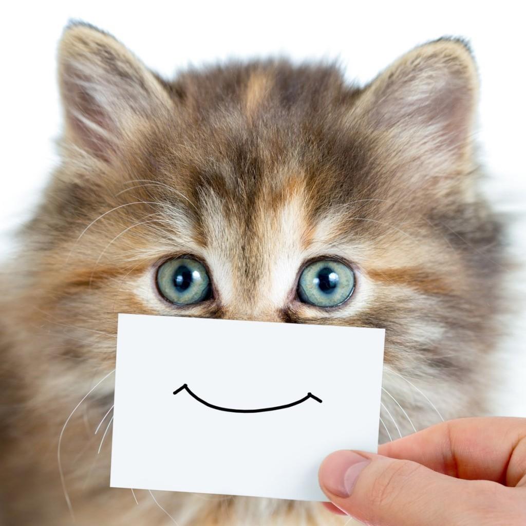 Как кота сделать счастливым и красивым