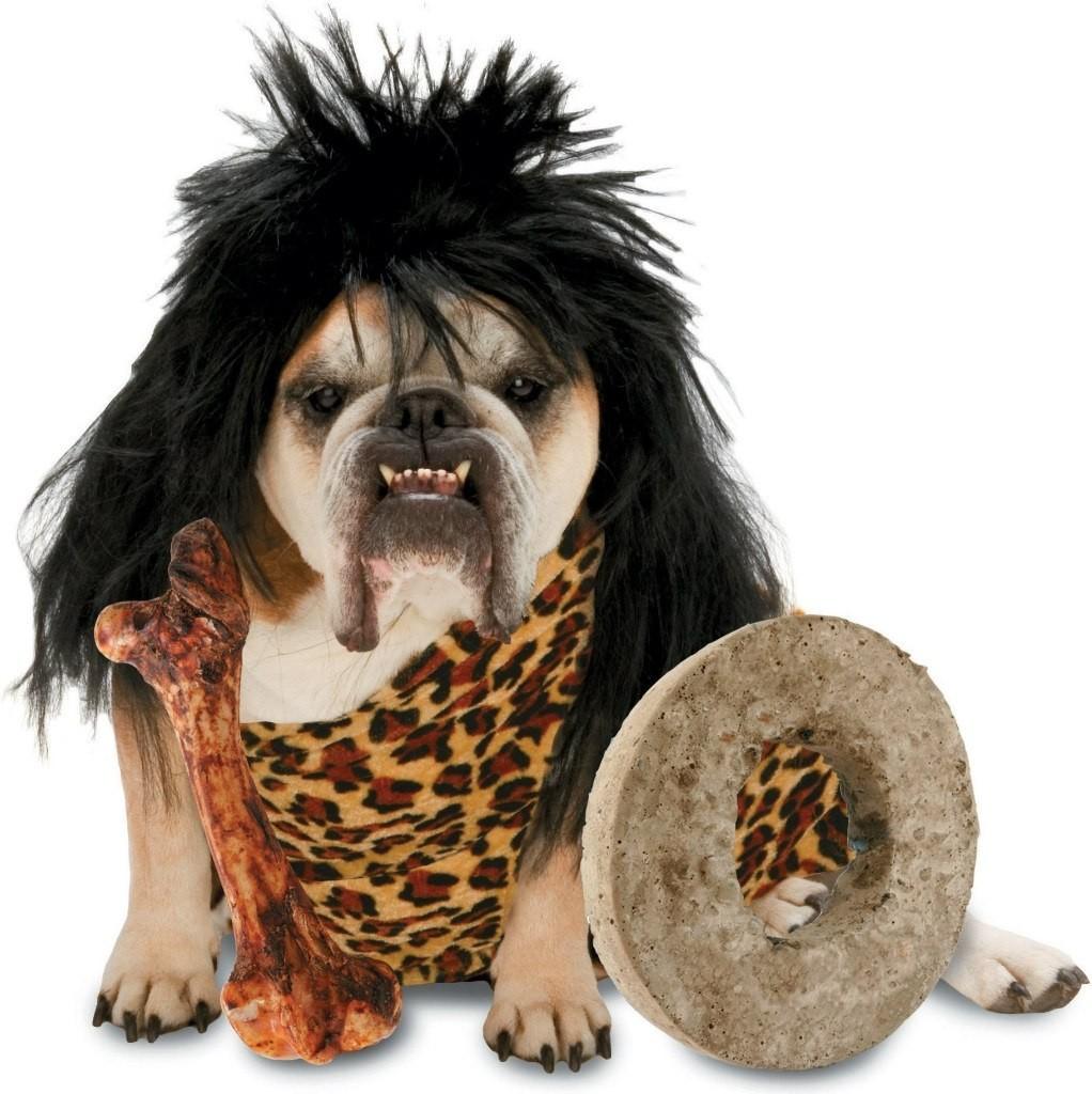funny dog costumes - 736×738