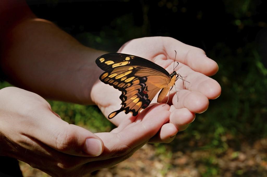 Бабочки в руках картинки, анимация картинки картинки