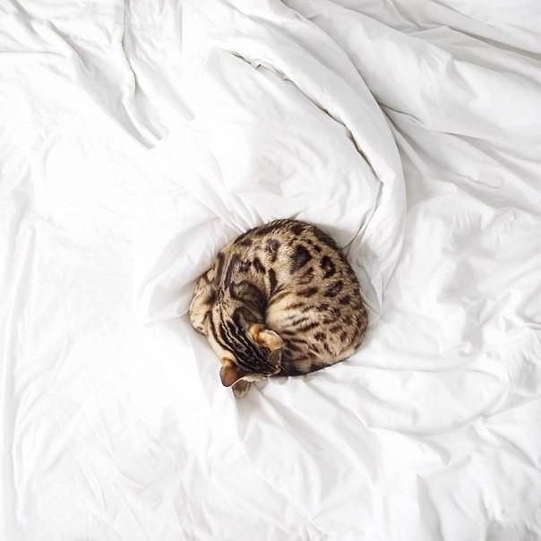 свернувшийся котенок картинки икона