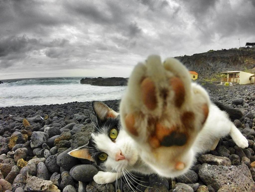 Картинки кота на море