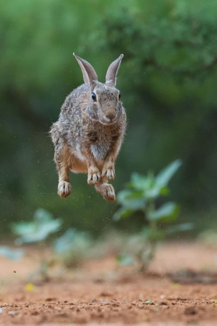 Картинка зайца смешного, цветов открытка