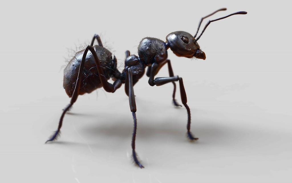 птицы в картинках муравей металлоискатель разработан